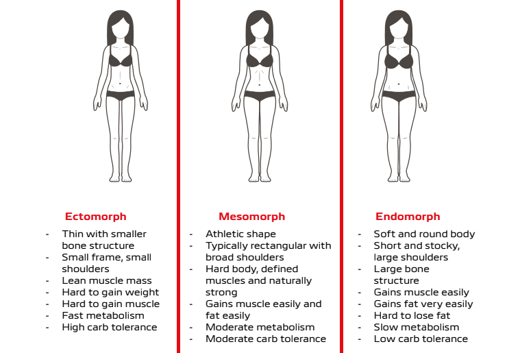 Graphic of three somatotypes and list of physical characteristics of each type