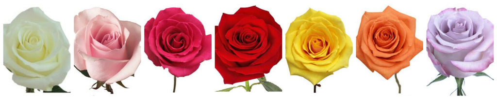 Please Choose Your Rose Color