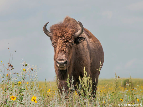 Bison Byway