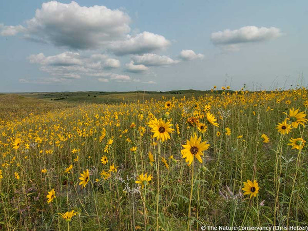 Prairie Wildflowers The Nature Conservancy