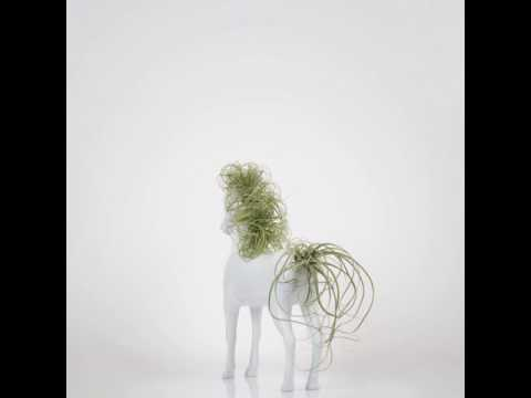 Tillandsia Horse (Big)