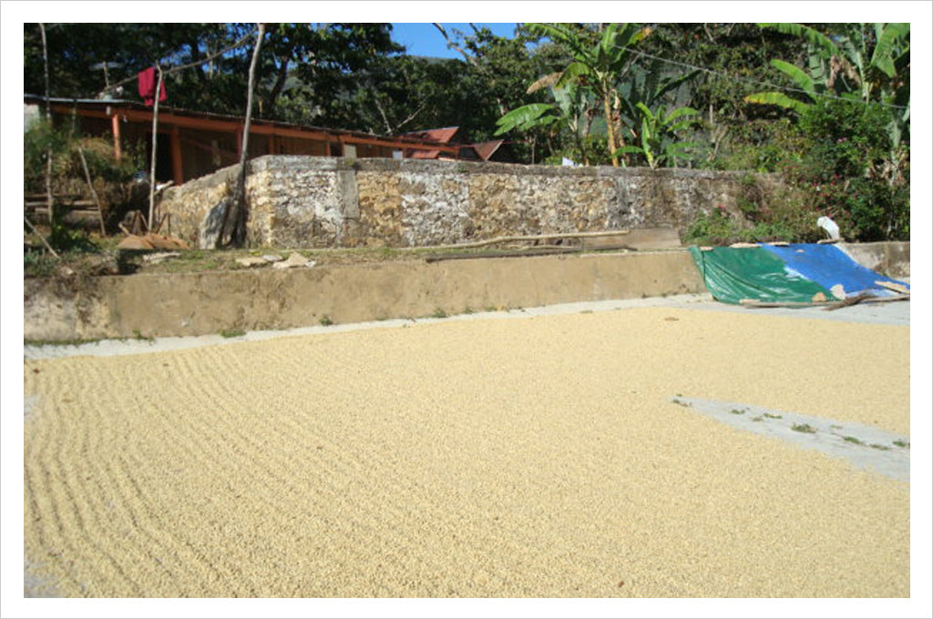 New Single Origin Coffee: Mexico Oaxaca Pluma Hidalgo