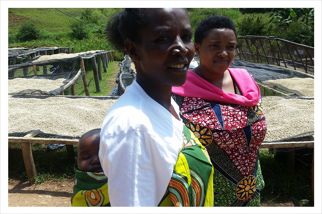 Rwanda Sholi, Women Produced Microlot, Cupping Room Collection