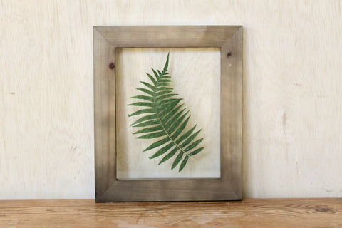 Pressed Licorice Fern, 8x10
