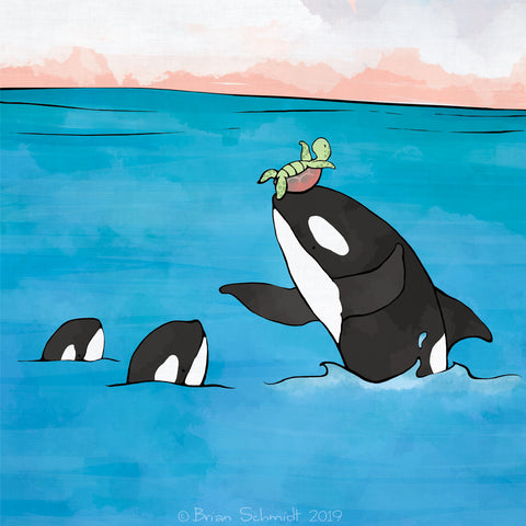 Orcas Art Print - Playing with a Sea Turtle