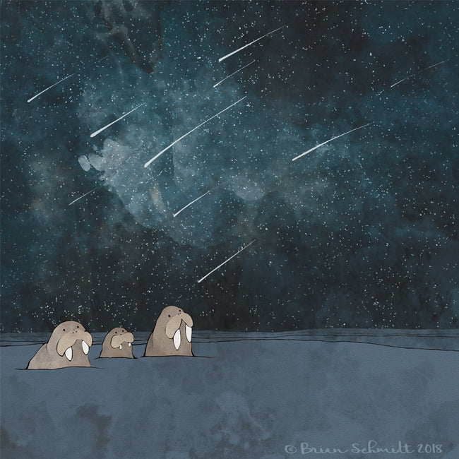 Walrus Family Art Print - Shooting Stars