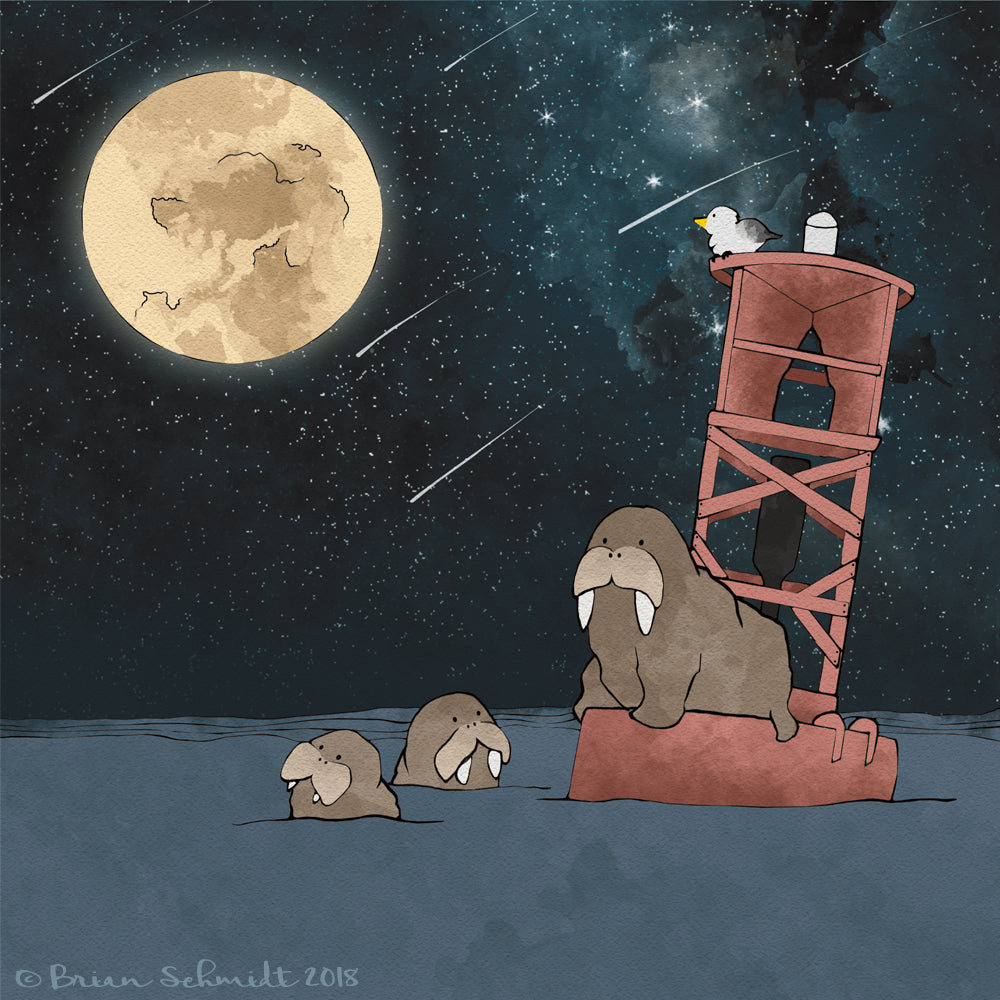Walrus Family Art Print - Moon and Shooting Stars