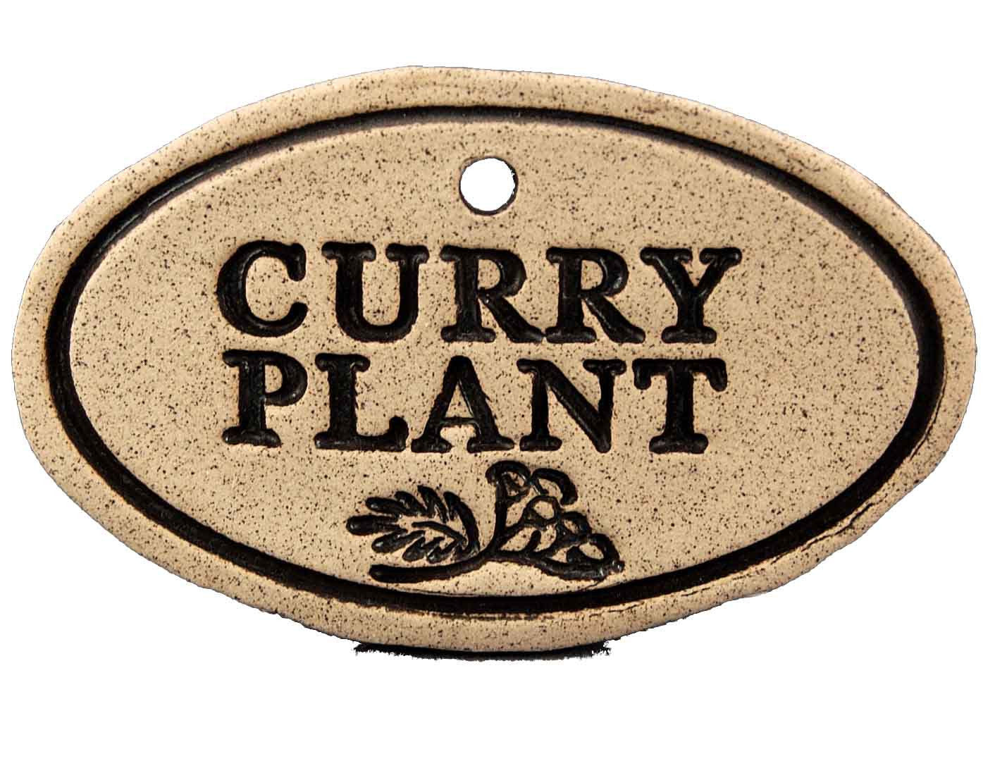 Curry Plant - Amaranth Stoneware Canada