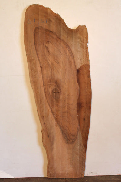 English Walnut S-1151