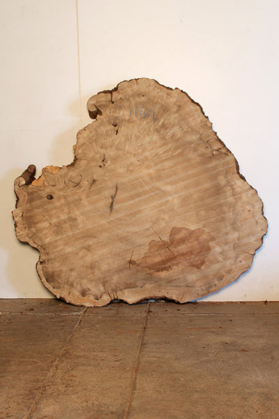 Bay Laurel Burl S-1169