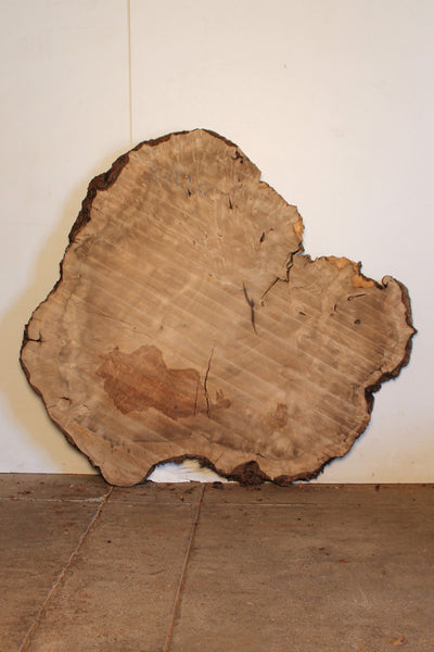 Bay Laurel Burl S-1170