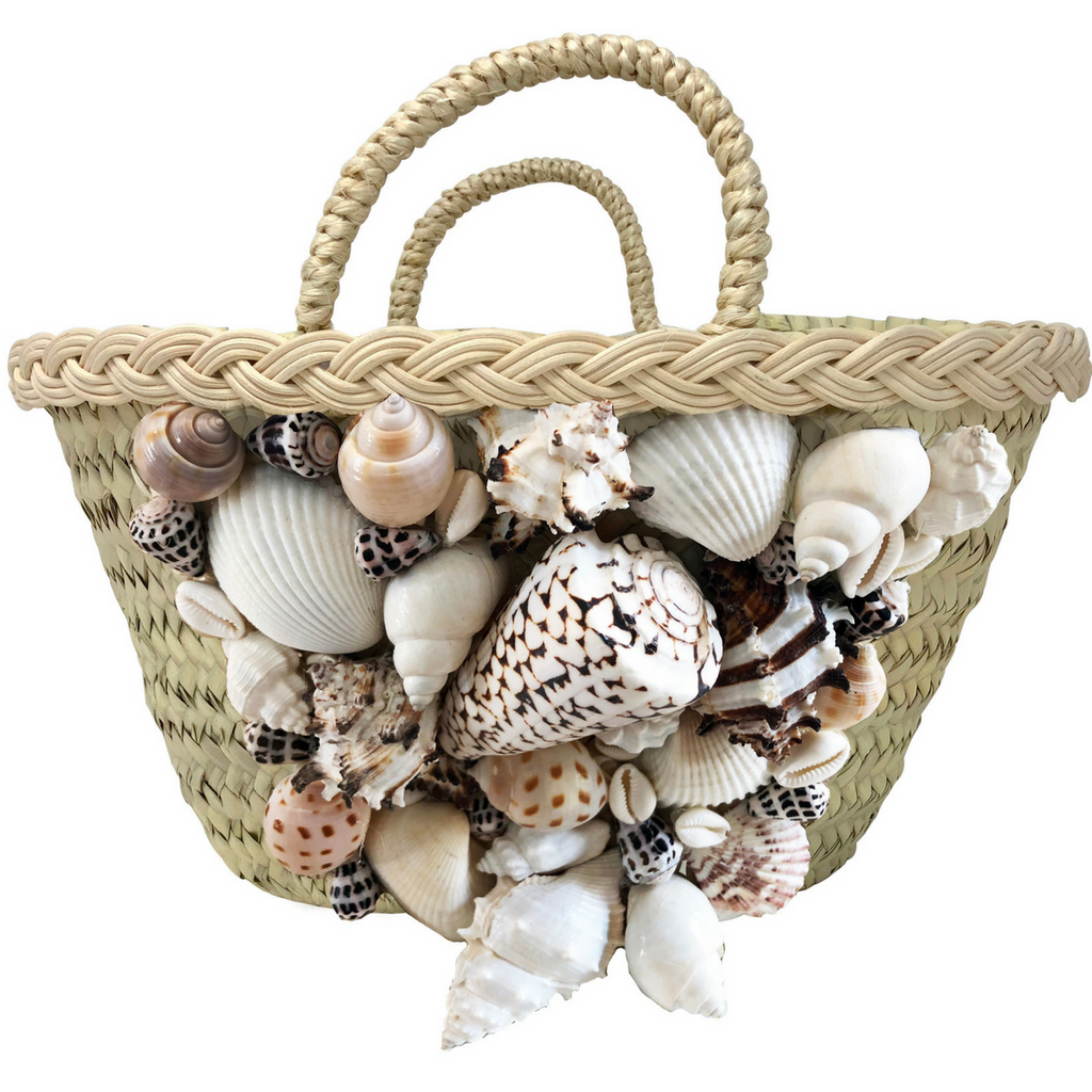 Rebecca de Ravenel She Sells Sea Shells BS3mj