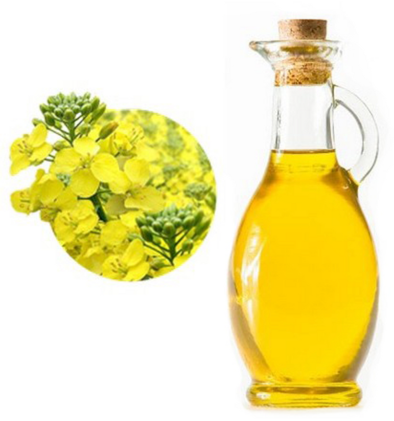WHOLESALE OF FIRST COLD PRESSED UNREFINED CAMELINA OIL