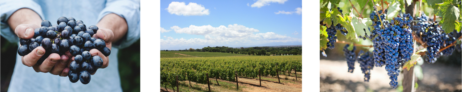 Sustainable Practices in Viniculture & Hospitality Bellarine Peninsula
