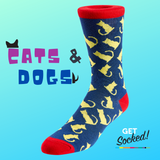 odd socks one with cats the other with dogs