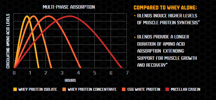 Long lasting protein with multi-phase absorption