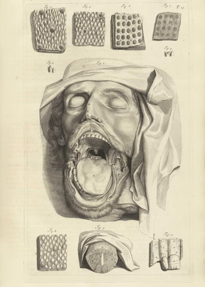 Vintage Anatomy 'The Face and Mouth', from 'Anatomia Humani Corpis', 1685, Netherlands, Govard Bidloo, Gerard de Lairesse, Reproduction 200gsm A3 Vintage Medical Poster