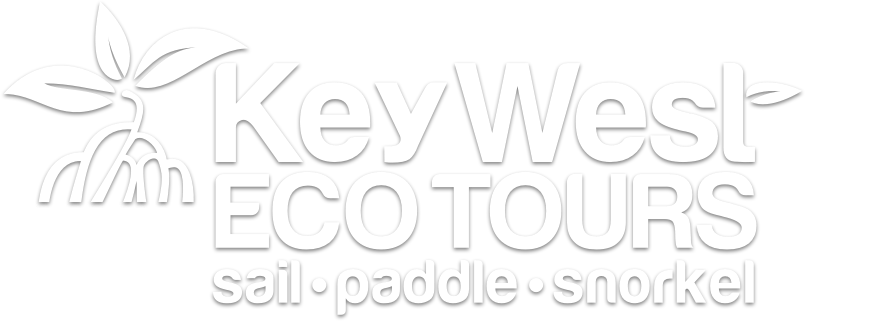 Geiger Key Paddle Hut / Key West Eco Tours