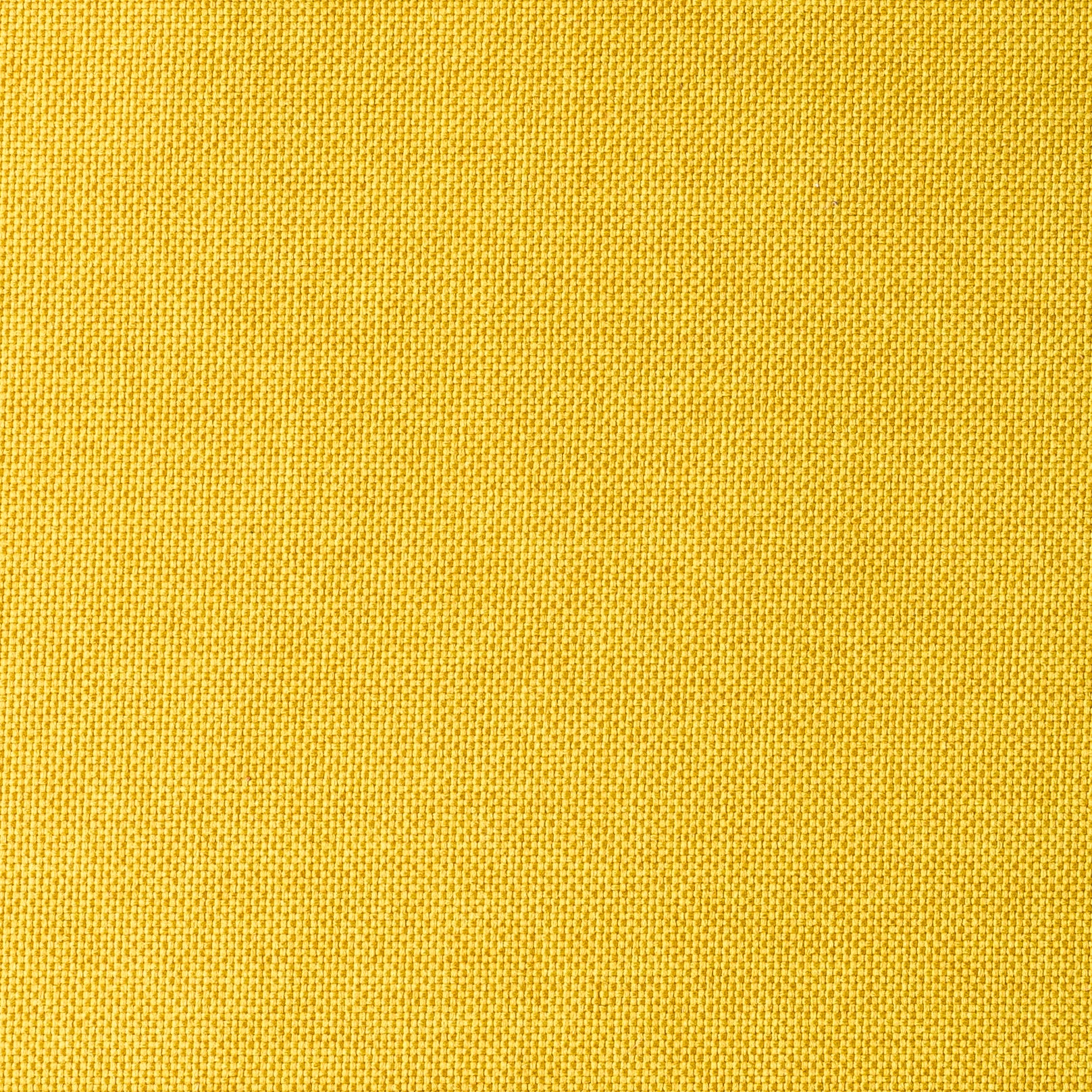 Savana Yellow
