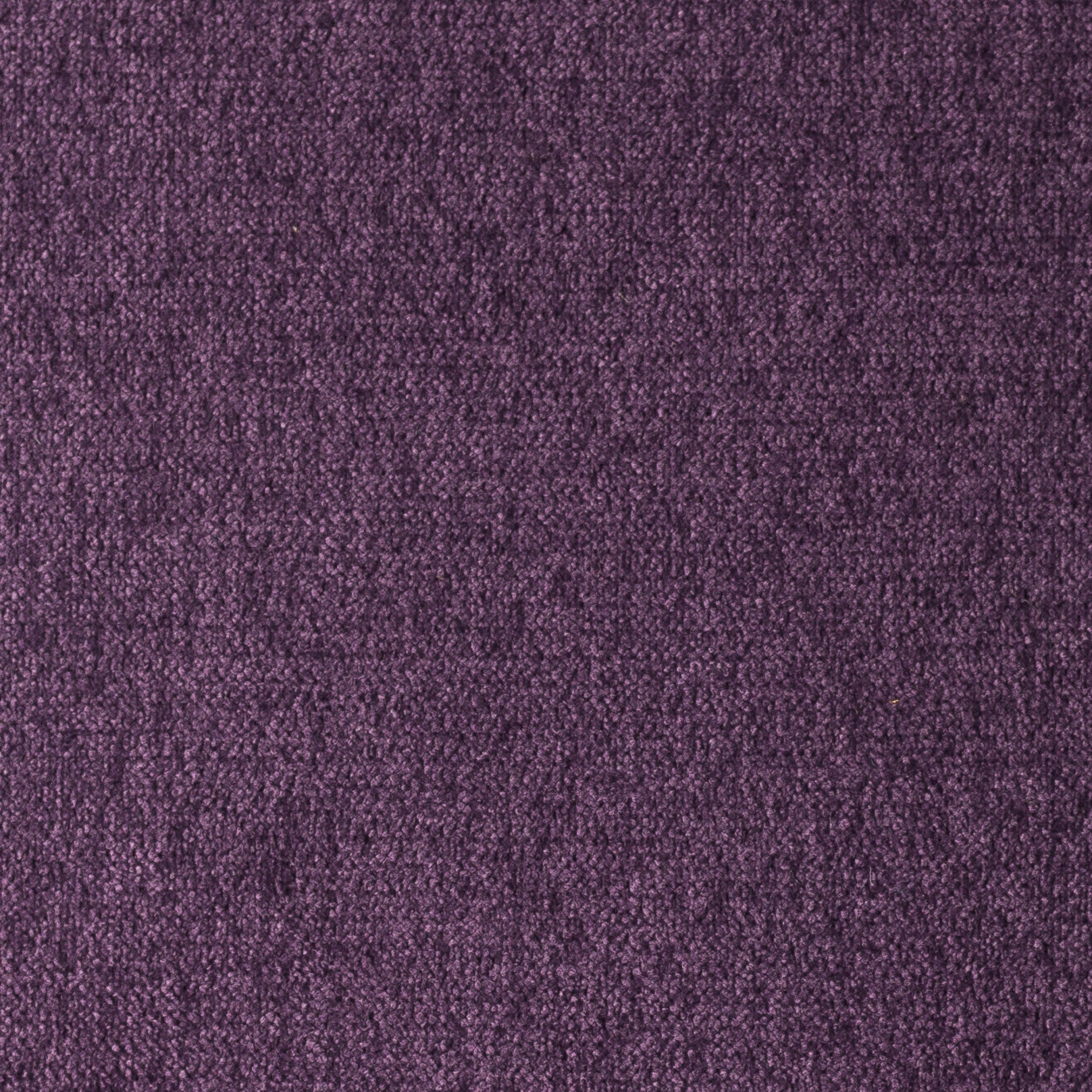 Cairo Purple