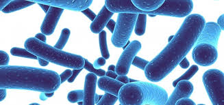 Probiotics and Prebiotics - A Powerful Combination For Gut Health