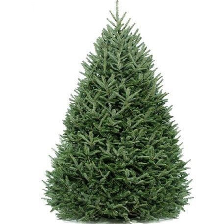 7' DIY Christmas - Real Christmas Tree with extras - Christmas Tree Package - 7' DIY real Christmas tree package - Rent-A-Christmas