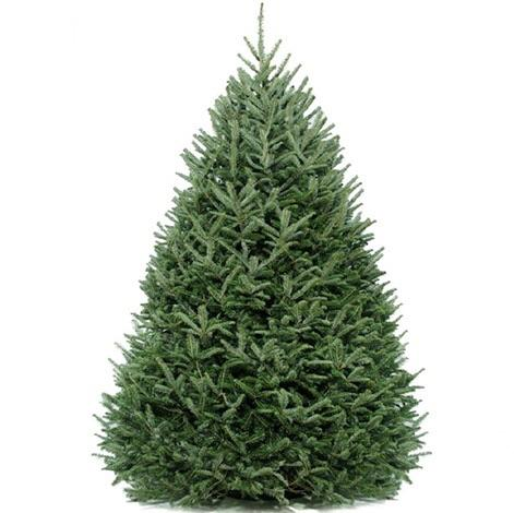 8' DIY Christmas - Real Christmas Tree with extras - Christmas Tree Package - 8' DIY real Christmas tree package - Rent-A-Christmas