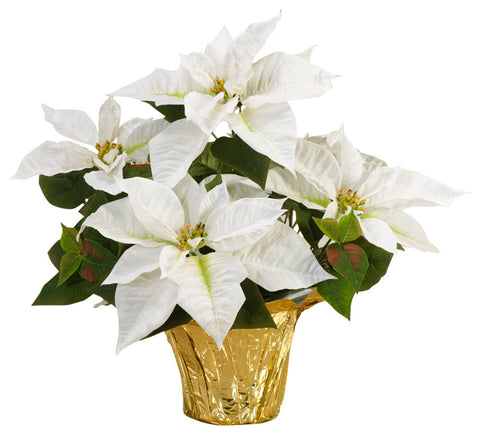 Real White Poinsettia - Real White Poinsettia - Rent-A-Christmas - Rent-A-Christmas