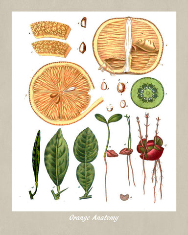 Orange Print Vintage Botanical Illustration Poster Art - OnTrendAndFab