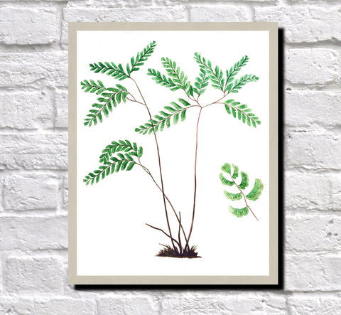 Fern Print Vintage Book Plate Art Botanical Illustration Poster