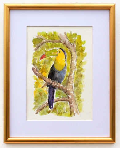 Toucan Watercolor Painting Tropical Bird Painting Framed by Andi Lucas