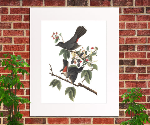 Cat Bird Illustration Print Vintage Bird Sketch Art 0413