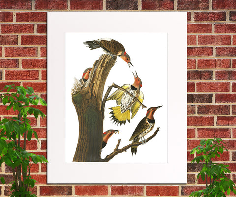 Gold Winged Woodpecker Illustration Print Vintage Bird Sketch Art 0415
