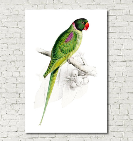 Hooded Parakeet Illustration Print Vintage Bird Sketch Art 0581