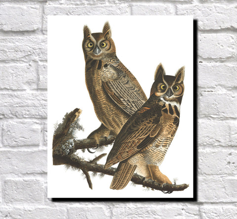 Great Horned Owl Illustration Print Vintage Bird Sketch Art 0421
