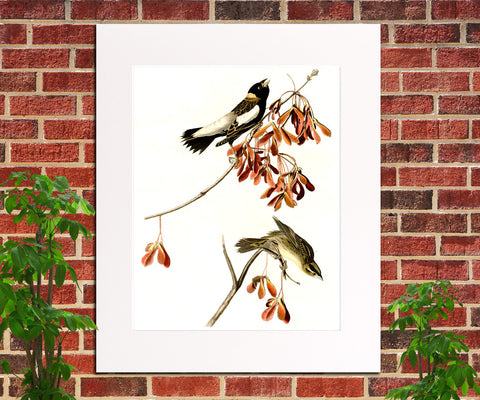 Rice Bird Illustration Print Vintage Bird Sketch Art 0412