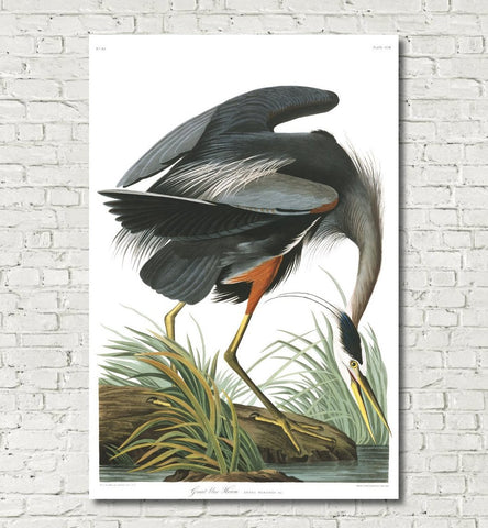 Great Blue Heron Illustration Print Vintage Bird Sketch Art 0580