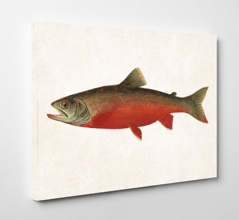 Canadian Red Trout Fishing Print, Angling Wall Art