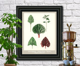 Leaves Print Vintage Botanical Illustration Poster Art - OnTrendAndFab