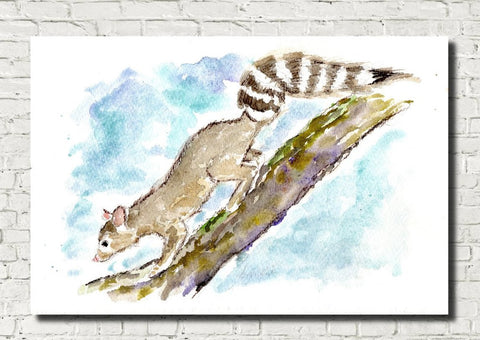Ringtail Cat Watercolour Print, Andi Lucas Wildlife Art