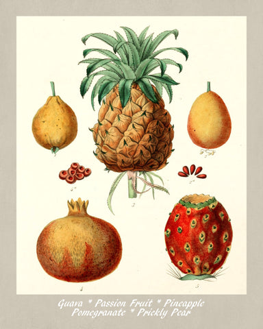 Tropical Fruit Print Vintage Botanical Illustration Poster Art - OnTrendAndFab