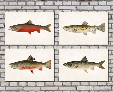 Trout Fishing Prints Set 4 Angling Wall Art 0589