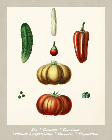 Vegetables Print Vintage Botanical Illustration Poster Art - OnTrendAndFab