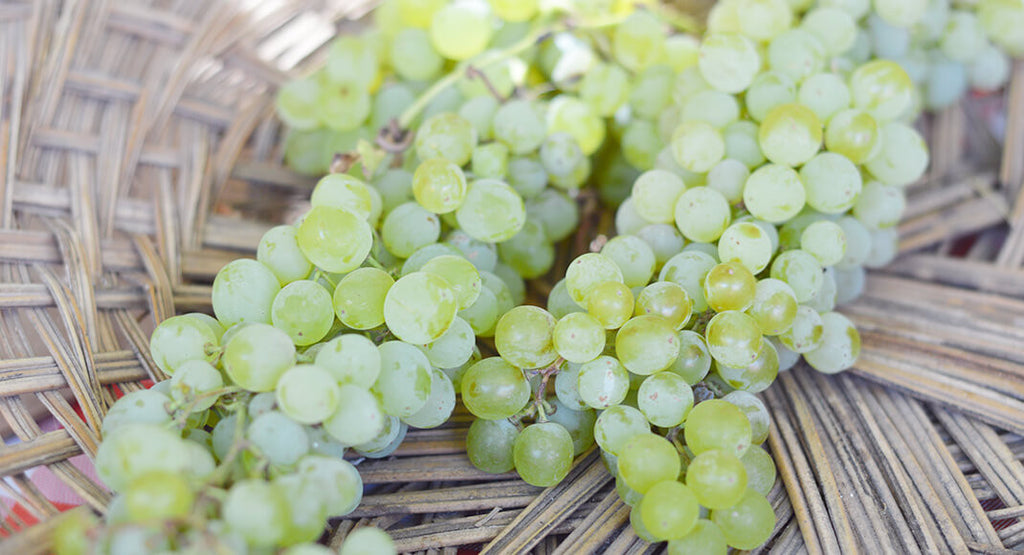 Types Of White Wines And What They Taste Like