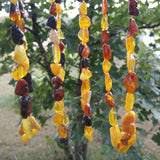 Adult Polished Baltic Amber Necklace ~ 18 -20 inches - Baltic Amber Necklace
