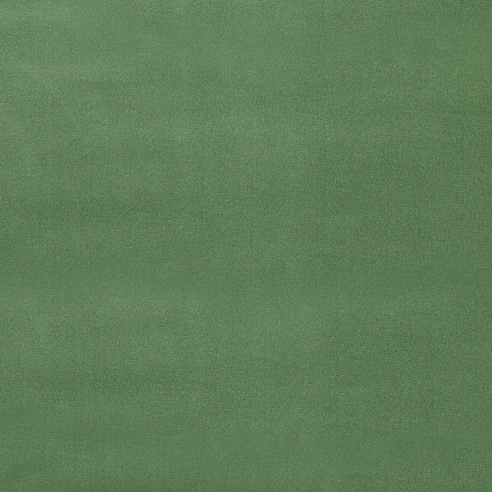 COTTON VELVET SOLIDS Torino Velvet Fabric - Farm Green