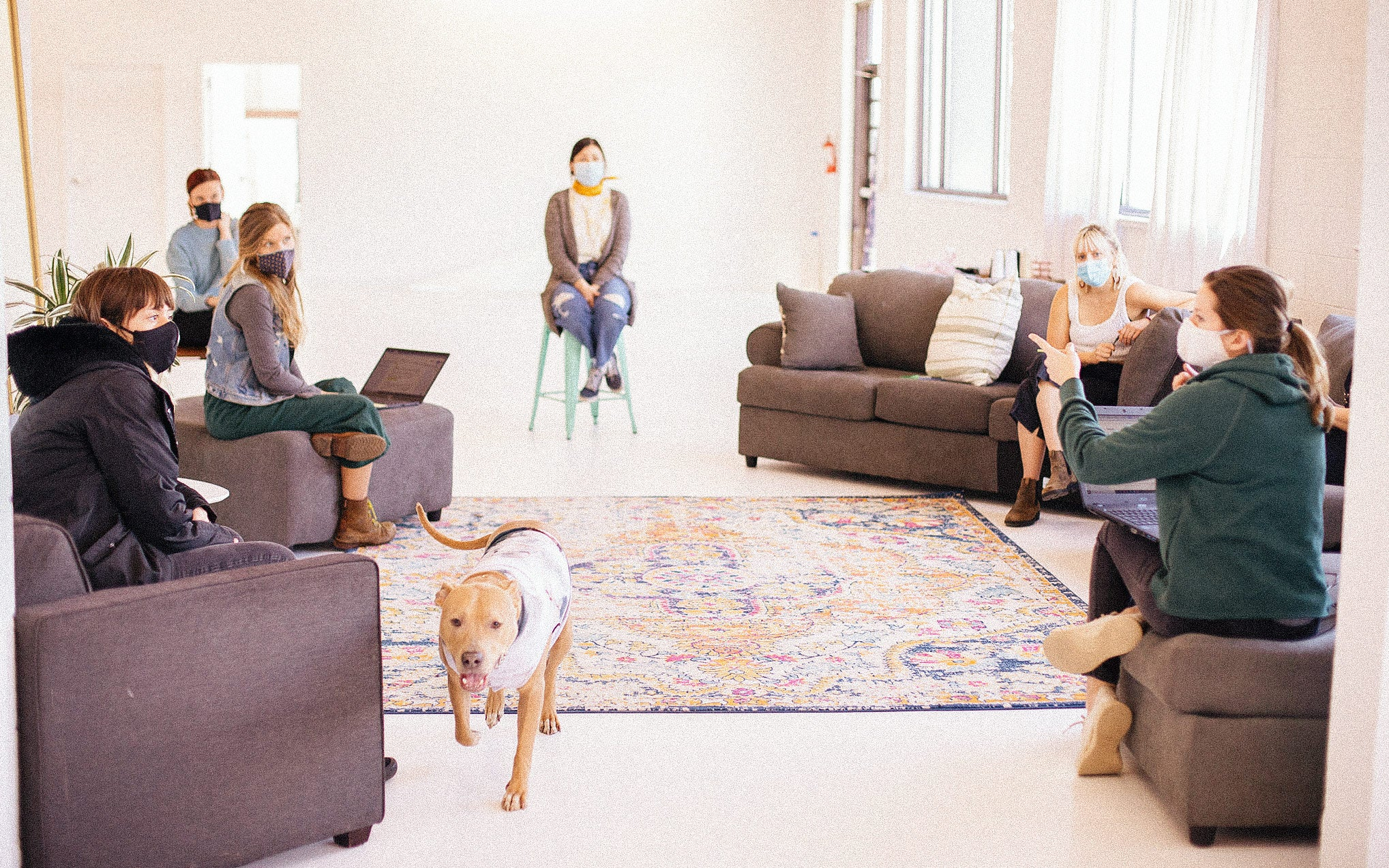 A team of six women all wearing face masks sit in a circle for a group meeting as a dog walks down the middle of the room.