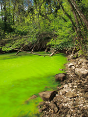 Eutrophication - Algal Bloom