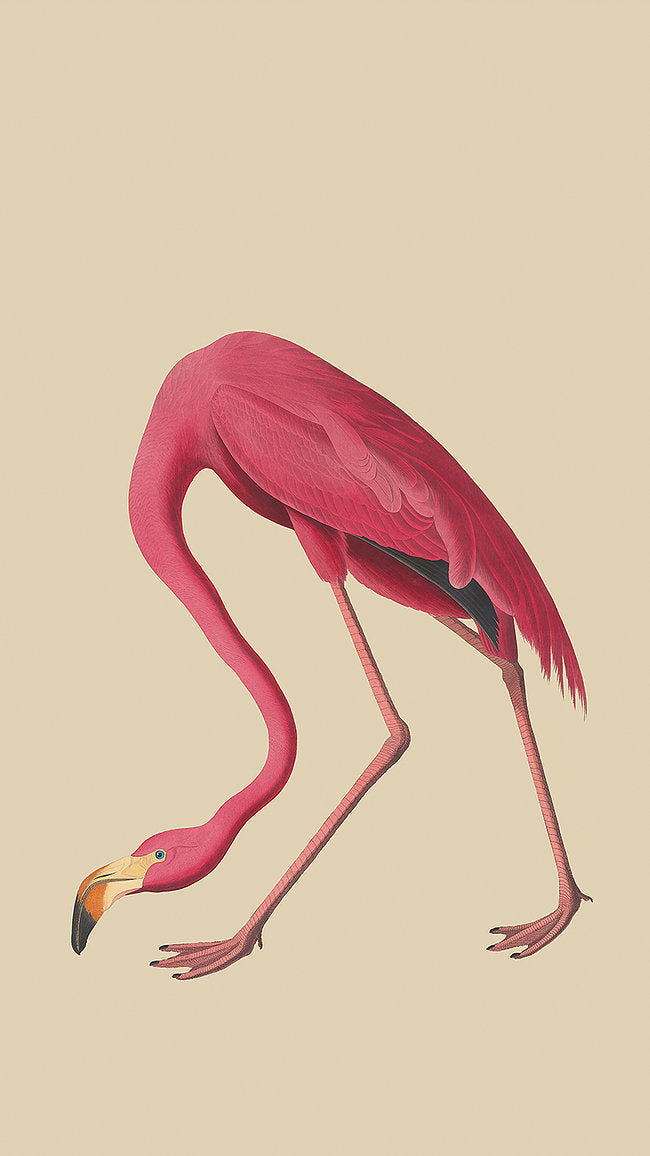 Sheila - Flamingo Picture - Applemoon Interiors
