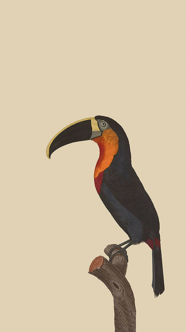Troublemaker - Toucan Picture - Applemoon Interiors